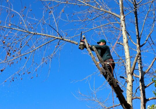 Contact Us-North Miami FL Tree Trimming and Stump Grinding Services-We Offer Tree Trimming Services, Tree Removal, Tree Pruning, Tree Cutting, Residential and Commercial Tree Trimming Services, Storm Damage, Emergency Tree Removal, Land Clearing, Tree Companies, Tree Care Service, Stump Grinding, and we're the Best Tree Trimming Company Near You Guaranteed!