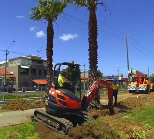 Palm Tree Removal-North Miami FL Tree Trimming and Stump Grinding Services-We Offer Tree Trimming Services, Tree Removal, Tree Pruning, Tree Cutting, Residential and Commercial Tree Trimming Services, Storm Damage, Emergency Tree Removal, Land Clearing, Tree Companies, Tree Care Service, Stump Grinding, and we're the Best Tree Trimming Company Near You Guaranteed!