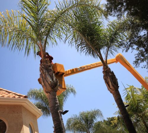 Palm Tree Trimming-North Miami FL Tree Trimming and Stump Grinding Services-We Offer Tree Trimming Services, Tree Removal, Tree Pruning, Tree Cutting, Residential and Commercial Tree Trimming Services, Storm Damage, Emergency Tree Removal, Land Clearing, Tree Companies, Tree Care Service, Stump Grinding, and we're the Best Tree Trimming Company Near You Guaranteed!