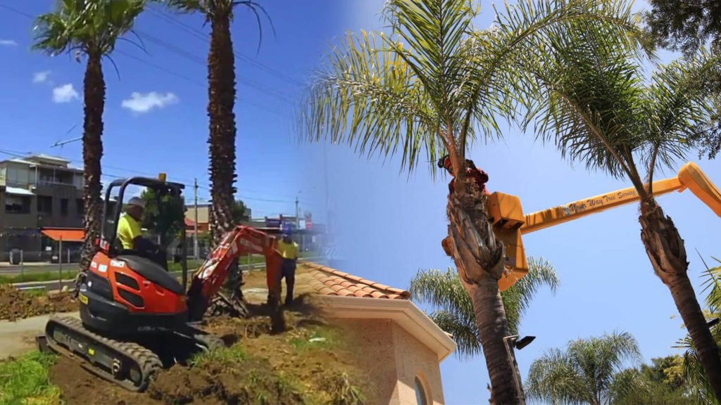 Palm tree trimming & palm tree removal-North Miami FL Tree Trimming and Stump Grinding Services-We Offer Tree Trimming Services, Tree Removal, Tree Pruning, Tree Cutting, Residential and Commercial Tree Trimming Services, Storm Damage, Emergency Tree Removal, Land Clearing, Tree Companies, Tree Care Service, Stump Grinding, and we're the Best Tree Trimming Company Near You Guaranteed!
