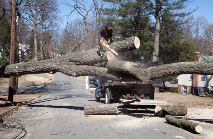 Residential Tree Services-North Miami FL Tree Trimming and Stump Grinding Services-We Offer Tree Trimming Services, Tree Removal, Tree Pruning, Tree Cutting, Residential and Commercial Tree Trimming Services, Storm Damage, Emergency Tree Removal, Land Clearing, Tree Companies, Tree Care Service, Stump Grinding, and we're the Best Tree Trimming Company Near You Guaranteed!
