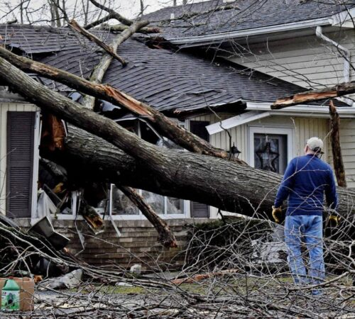 Storm Damage-North Miami FL Tree Trimming and Stump Grinding Services-We Offer Tree Trimming Services, Tree Removal, Tree Pruning, Tree Cutting, Residential and Commercial Tree Trimming Services, Storm Damage, Emergency Tree Removal, Land Clearing, Tree Companies, Tree Care Service, Stump Grinding, and we're the Best Tree Trimming Company Near You Guaranteed!
