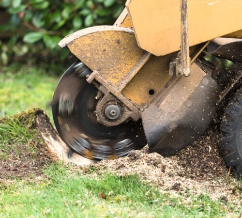 Stump Grinding-North Miami FL Tree Trimming and Stump Grinding Services-We Offer Tree Trimming Services, Tree Removal, Tree Pruning, Tree Cutting, Residential and Commercial Tree Trimming Services, Storm Damage, Emergency Tree Removal, Land Clearing, Tree Companies, Tree Care Service, Stump Grinding, and we're the Best Tree Trimming Company Near You Guaranteed!