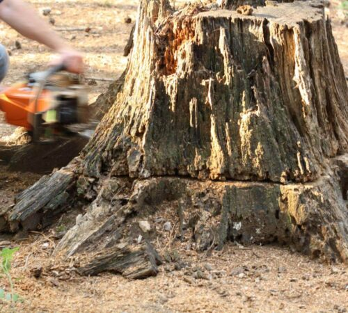 Stump Removal-North Miami FL Tree Trimming and Stump Grinding Services-We Offer Tree Trimming Services, Tree Removal, Tree Pruning, Tree Cutting, Residential and Commercial Tree Trimming Services, Storm Damage, Emergency Tree Removal, Land Clearing, Tree Companies, Tree Care Service, Stump Grinding, and we're the Best Tree Trimming Company Near You Guaranteed!