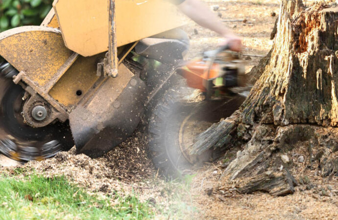 Stump grinding & removal-North Miami FL Tree Trimming and Stump Grinding Services-We Offer Tree Trimming Services, Tree Removal, Tree Pruning, Tree Cutting, Residential and Commercial Tree Trimming Services, Storm Damage, Emergency Tree Removal, Land Clearing, Tree Companies, Tree Care Service, Stump Grinding, and we're the Best Tree Trimming Company Near You Guaranteed!