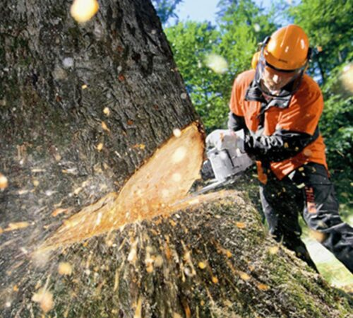 Tree Cutting-North Miami FL Tree Trimming and Stump Grinding Services-We Offer Tree Trimming Services, Tree Removal, Tree Pruning, Tree Cutting, Residential and Commercial Tree Trimming Services, Storm Damage, Emergency Tree Removal, Land Clearing, Tree Companies, Tree Care Service, Stump Grinding, and we're the Best Tree Trimming Company Near You Guaranteed!