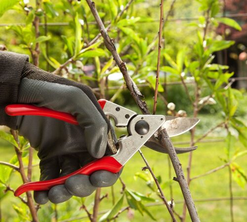 Tree Pruning-North Miami FL Tree Trimming and Stump Grinding Services-We Offer Tree Trimming Services, Tree Removal, Tree Pruning, Tree Cutting, Residential and Commercial Tree Trimming Services, Storm Damage, Emergency Tree Removal, Land Clearing, Tree Companies, Tree Care Service, Stump Grinding, and we're the Best Tree Trimming Company Near You Guaranteed!