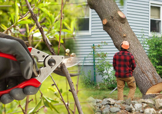 Tree pruning & tree removal-North Miami FL Tree Trimming and Stump Grinding Services-We Offer Tree Trimming Services, Tree Removal, Tree Pruning, Tree Cutting, Residential and Commercial Tree Trimming Services, Storm Damage, Emergency Tree Removal, Land Clearing, Tree Companies, Tree Care Service, Stump Grinding, and we're the Best Tree Trimming Company Near You Guaranteed!